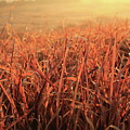 Grass Dyed In The Morning Glow by Minori Koishi