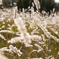 Grass Field by Stefan Sigemo