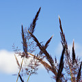 Grass Florets by Jorgo Photography - Wall Art Gallery