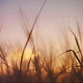 Grass In A Windy Field by Fabrizio Troiani
