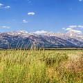 Grass In The Wind by Mirko Chianucci