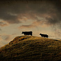 Grass Is Greener On The Other Side by Shauna Fockler