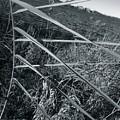 Grass by Julian Grant