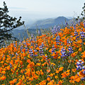 Grass Mountain Wildflowers by Kyle Hanson