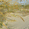 Grass On The Beach Sand by Zina Stromberg
