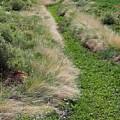 Grass Path by Ruth Ann Mertens