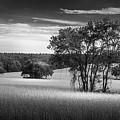 Grass Safari-bw by Marvin Spates