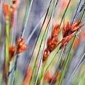 Grass Seeds by Martin Heigan