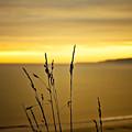 Grass by Svetlana Sewell