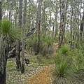Grass Tree Forest Setting Australia by NaturesPix