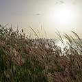 Grass Wave by Ferry Zievinger