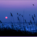 Grasses Frame The Setting Sun In Florida by Mal Bray