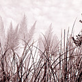 Grasses by Katherine Huck Fernie Howard