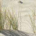 Grasses On The Beach by Wendy Raatz Photography