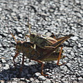 Grasshoper Love by Christiane Schulze Art And Photography