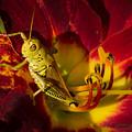 Grasshopper Basking by Rikk Flohr