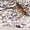Grasshopper by Chris Andruskiewicz