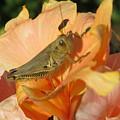 Grasshopper by Cindy Kellogg