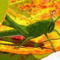 Grasshopper by David Lee Thompson