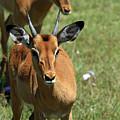 Grassland Deer by Aidan Moran