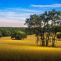 Grassland Safari by Marvin Spates