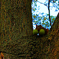 Grateful Tree Squirrel by Michael Rucker