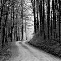 Gravel Lane by Jenny Gandert