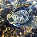 Gravitron Warped One by Sue Reed