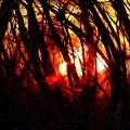 Gravity Inversion At Sunset by Steve Doris