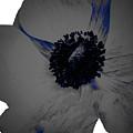 Gray Blue Poppy by Heather Joyce Morrill