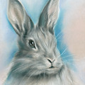 Gray Bunny Rabbit On Blue by MM Anderson