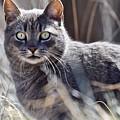 Gray Cat In Woods by Jeramey Lende
