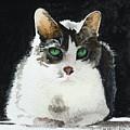 Gray Cat by Lynn Hansen