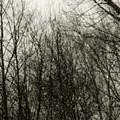 Gray Dawn by RC DeWinter