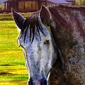 Gray Horse by Catherine G McElroy