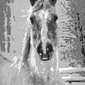 Gray Horse by Tina Meador