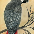 Gray Parrot by Bertie Edwards