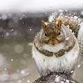 Gray Squirrel by Henry Kim