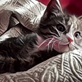 Gray Tabby With White Quilted Throw by Tarisa Smith