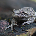 Gray Treefrog On A Log by Max Allen