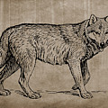 Gray Wolf Timber Wolf Western Wolf Woods Texture by Movie Poster Prints