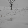 Grayish Winter by Dylan Punke