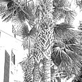 Grayscale Palm Trees Pen And Ink by Marian Bell