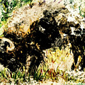 Grazing Bison by Esther Brown