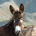 Grazing Burros by Stephen Whalen