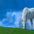 Grazing by Dominic White