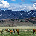 Grazing Herd by Gary Mosman