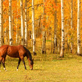 Grazing Horse In The Autumn Pasture by James BO  Insogna