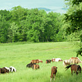 Grazing In The Morning by Barbara Rabek