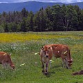 Grazing In The Pasture by Donna Cavanaugh